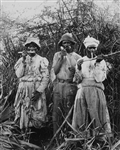 Cane Cutters in Jamaica