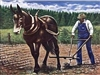 This print depicts a poor post-slavery sharecropper plowing the field