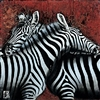 Couple de Zebras I