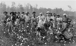 Cotton Planter and His Pickers, West Point, MS, 1908