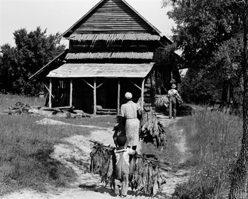 Tobacco Farm Family Orange County Nc 1939