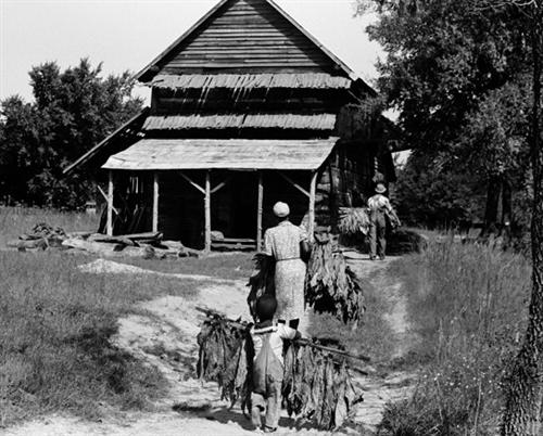 Tobacco Farm Family Orange County Nc 1939